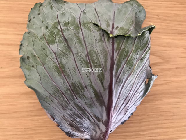 紫キャベツの葉