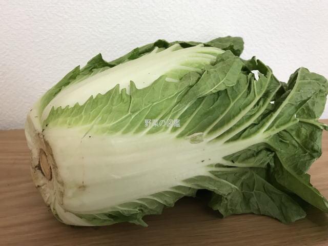 白菜を横に寝かせて下側から撮影
