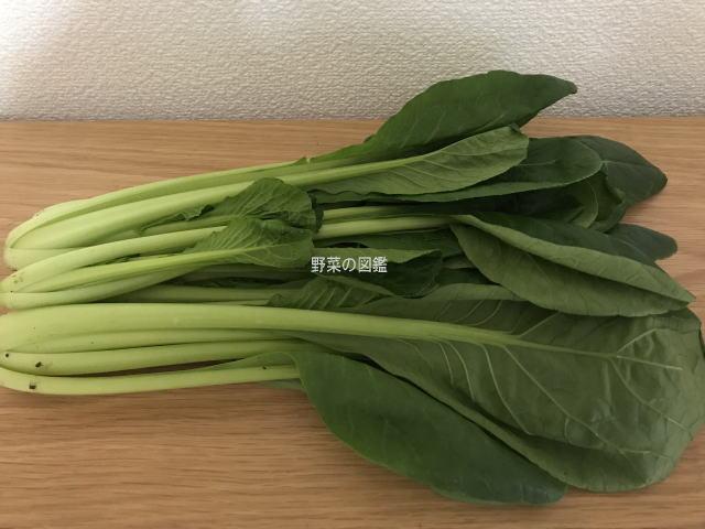 小松菜を寝かせて撮影
