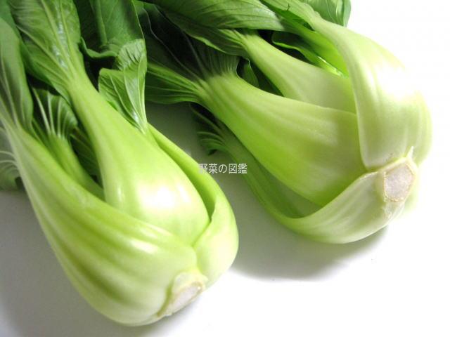チンゲン菜の茎と切り口