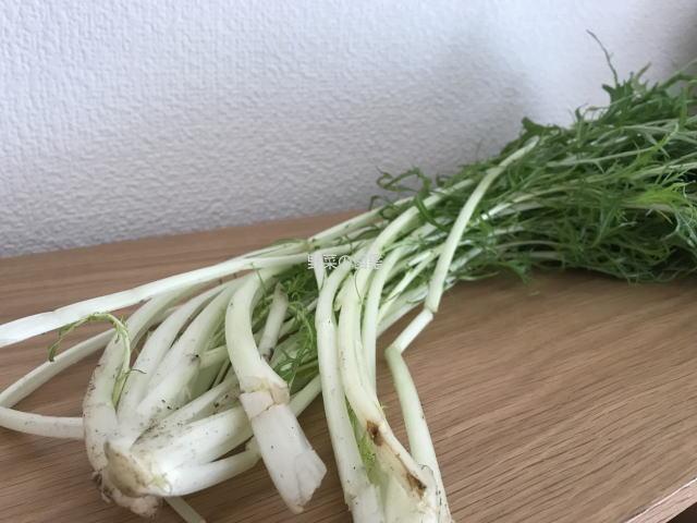 水菜の茎と株の部分