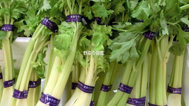 野菜売り場に並ぶセロリ