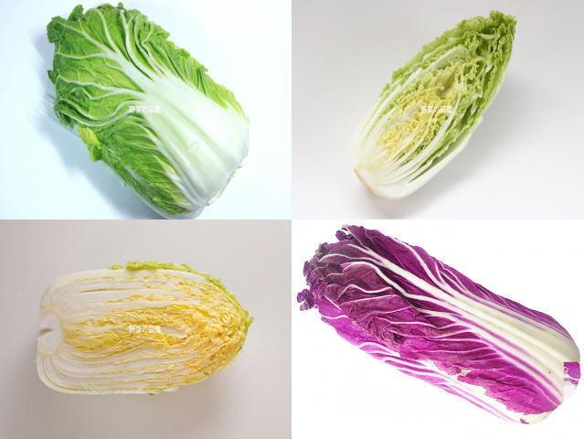 白菜4品種(普通の白菜、ミニ白菜、オレンジクイン、紫白菜)
