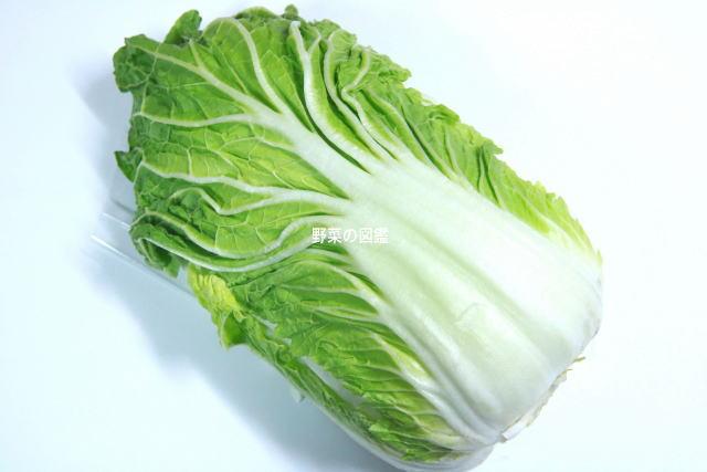 霜降り白菜