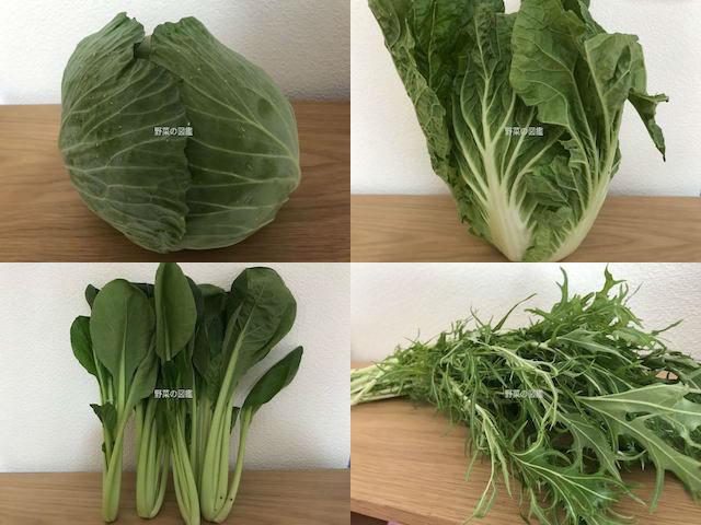 アブラナ科の野菜(キャベツ・白菜・小松菜。水菜)