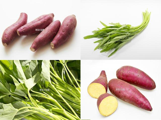 ヒルガオ科の野菜(さつまいも・空心菜)