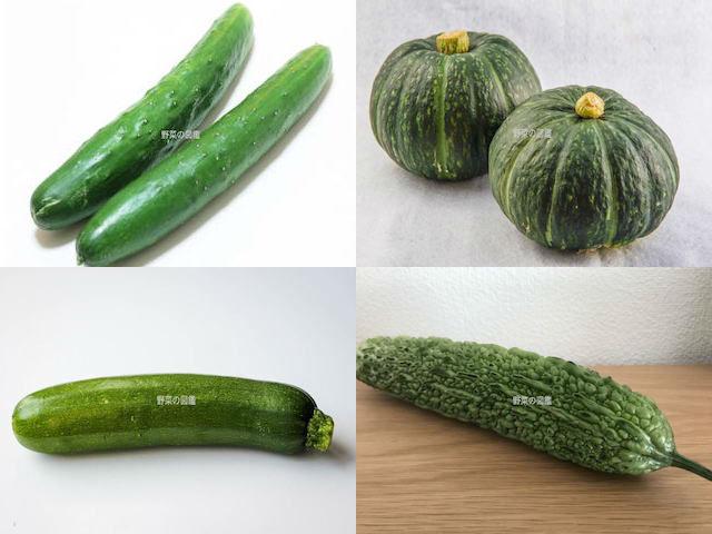 ウリ科の野菜(きゅうり・かぼちゃ・ズッキーニ・ゴーヤ)