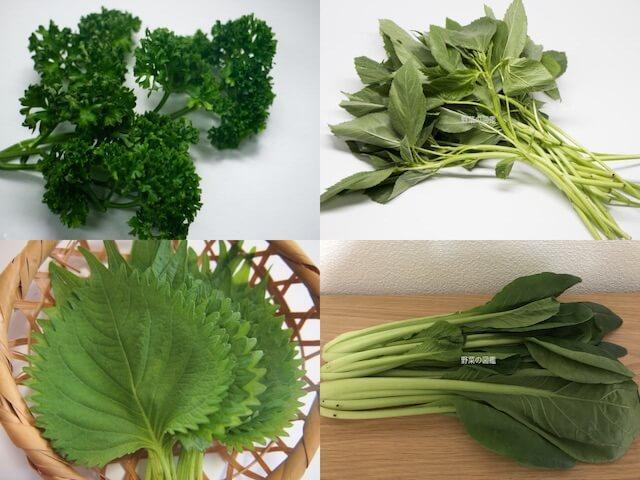 カルシウムの含有量が多い野菜(パセリ、モロヘイヤ、しそ、小松菜)