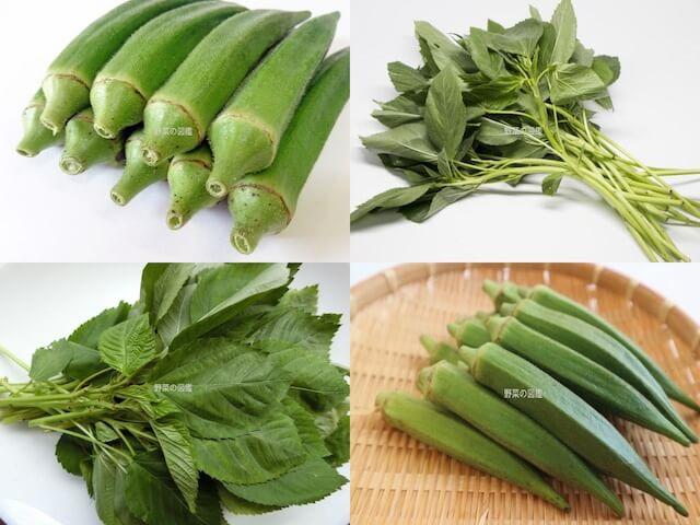 アオイ科の野菜(オクラ、モロヘイヤ)
